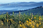 The wine-growing area of Chianti Classico,  Tuscany,  Italy