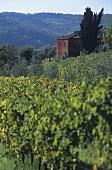 Weingut Casavecchia, Castellina in Chianti, Toskana, Italien