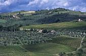 Wein- und Olivenberge, Castellina in Chianti, Toskana, Italien