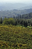 The Chianti Classico wine-growing area, Tuscany, Italy