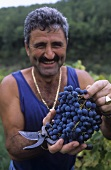 Man holding Sangiovese grapes, Livernano Wine Estate, Radda