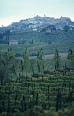 The wine-growing area of Montepulciano, Tuscany, Italy