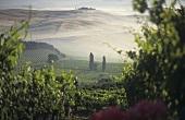 Montalcino in mist, Tuscany, Italy