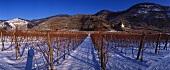 Vineyard in winter, Weissenkirchen, Wachau, Austria