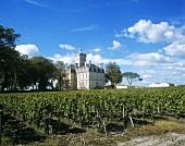 Château Larose-Trintaudon, Haut-Médoc, Médoc, Bordeaux, France