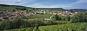 'Clos du Mesnil' vineyard site, Le Mesnil-sur-Oger, Champagne, France