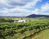 Lindemans Hunter River Winery, Lower Hunter Valley, NSW, Australia