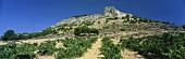 Wine-growing around Curiel de Duero, Ribera del Duero, Spain