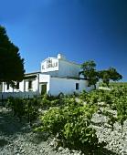 Osborne's Vina el Caballo Winery, Jerez de la Frontera, Spain