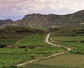 Wine growing around village of Labastida, Rioja Alavesa, Rioja, Spain