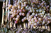 Prugnolo Gentile grapes on reed mats