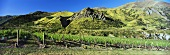 Chard Farm vineyards, Queenstown, N. Zealand