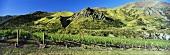 Weinberge des Weingutes Chard Farm, Queenstown, Neuseeland