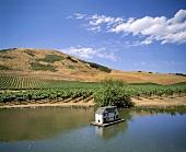 Schug Winery vineyard, Sonoma, California, USA
