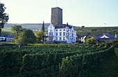 Wine-growing near Rüdesheim, Rheingau, Germany