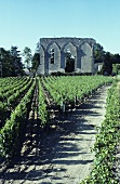 Wine-growing near St. Emilion, Bordeaux, France