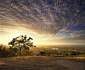 Sunrise over vineyards on Mountadam Estate, Australia