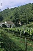 Castel Schwanburg Wine Estate, Nals, S. Tyrol, Italy