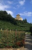 Schloss Korb Wine Estate, Eppan (Appiano), S. Tyrol, Italy