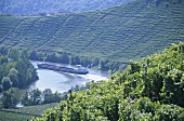 'Mundelsheimer Käsberg' single vineyard site, Mundelsheim, Württemberg