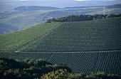 Scharzhofberg vineyard site, Scharzhof-Wiltingen, Saar, Germany