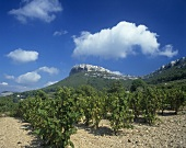 Vineyard near Cassis, with 'La Couronne de Charlemagne', Provence