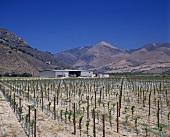 Au Bon Climat Winery, Santa Maria Valley, Santa Barbara