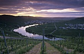 Evening over Trittenheim, Mosel-Saar-Ruwer, Germany