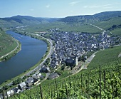 Mosel near Bremm, Zell (Lower Mosel), Mosel-Saar-Ruwer, Germany