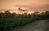 Cape Mentelle Vineyard, Margaret River, Westaustralien