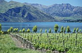Rippon Vineyard, Lake Wanaka, Central Otago, New Zealand