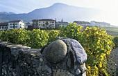 Wine-growing near Yovrne, Aigle, Vaud, Switzerland
