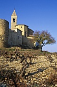 Vineyard near Cairanne, Côtes du Rhône, France