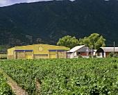 Vina La Rosa, Peumo, Rapel Valley, Chile