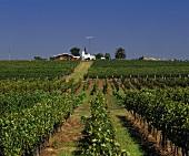 Tannat-Wein von Bodegas Pisano, Progreso, Canelones, Uruguay