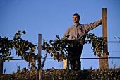 Josef Umathum in Frauenkirchen vineyard, Burgenland, Austria