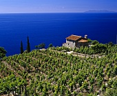 Small villa in vineyard, Colle d'Orano, Elba, Italy