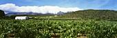 Weinberge bei Barrydale, Klein Karoo, Südafrika