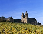 Vineyard next to Abbey of St. Hildegard, Rüdesheim, Germany