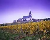 'Hochheimer Kirchenstück' individual vineyard site, Hochheim, DE