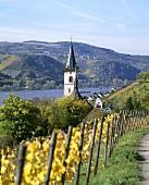 View over Lorch am Rhein, Rheingau, Germany