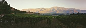Anwesen der Vina Errazuriz, Aconcagua Valley, Chile