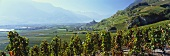 View of Saillon over vineyard, Valais, Switzerland