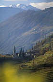 Wine region & village of St. Magdalena, S. Tyrol, Italy