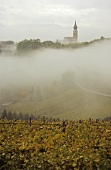 Vineyards in mist, St. Michael's church, Eppan, S. Tyrol, Italy