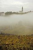 Vineyards in mist, St. Michael's church, Eppan, S. Tyrol, Italy
