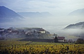 The village of Missian, Bolzano basin behind, S. Tyrol, Italy