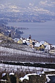 Wine villages of Rivaz & St. Saphorin, Lavaux, Vaud, Switzerland