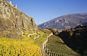 Tourbillon Castle above vineyard, Sion, Valais, Switzerland