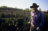 Bodenbearbeitung zwischen Rebzeilen, Mendoza, Argentinien